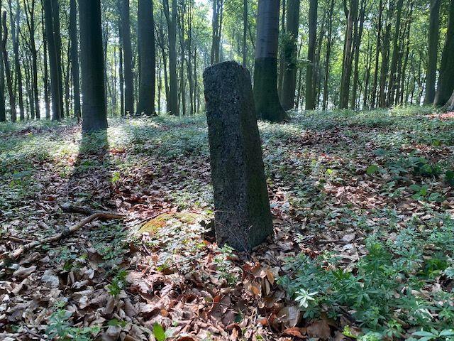 Bogenschießen Im Wald: Darf Man Das?